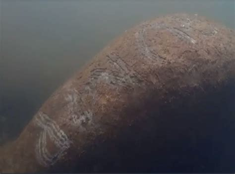 Manatee with 'Trump' scraped onto its back seen in video