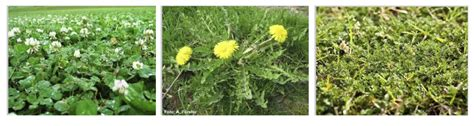 Winter Weeds | Lawn care advice from loveyourlawn | Love