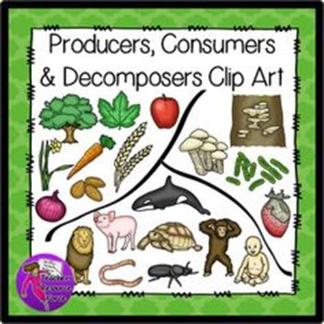 Some Parts of the Food Chain: Producers, Consumers