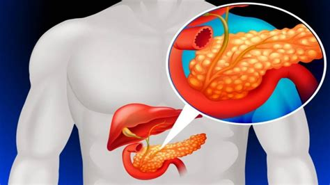 Pancrease - Functions, Location & Disorders and More