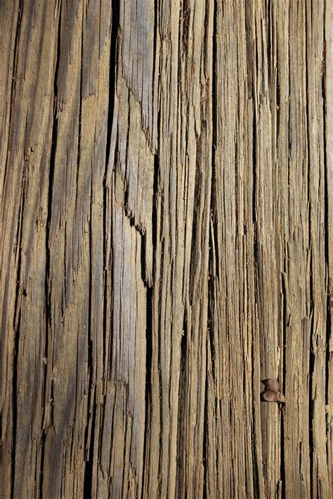 Free Images : tree, nature, branch, texture, plank, leaf