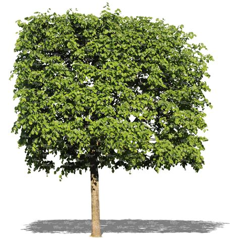 cut out tree with a square crown - VIShopper