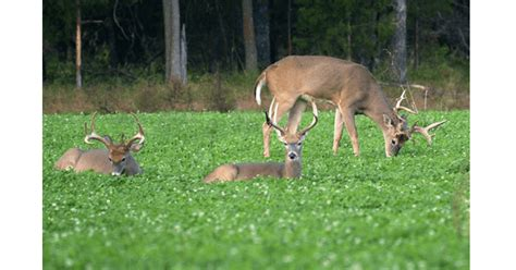 5 Most Important Offseason Hunting Tasks to Do Now