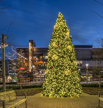 commercial outdoor christmas tree | Holiday Bright Lights